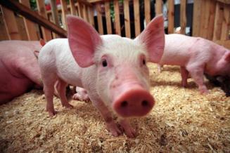 В Волгоградской области проводится профилактика опасных заболеваний животных
