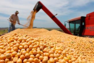 Субсидирование производства масличных для экспорта в 2021 году увеличат в 2,5 раза