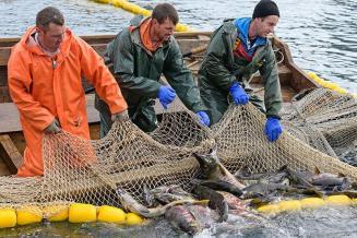 Рыбный бизнес РФ сменит рынки сбыта, если КНР не откроет порты