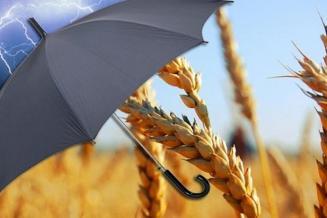 В 2020 г. орловские аграрии застраховали урожай на общую сумму 183 млн руб.