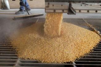 «Сибагро» завершила предпроектные работы над заводом по глубокой переработке зерна