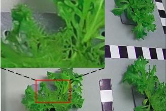 В Сколтехе создали систему искусственного интеллекта для контроля роста растений иавтоматизации процесса ихвыращивания
