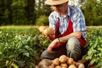 В 2020 году доля фермерской продукции увеличилась до 14,3%