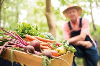 Мишустин: главы регионов должны помогать местным аграриям продвигать продукцию в сети