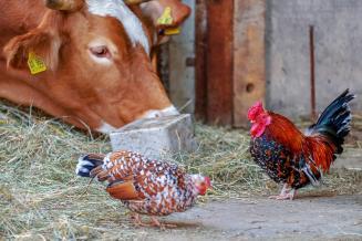 В Тамбовской области в 2020 году производство скота и птицы выросло на10,6%