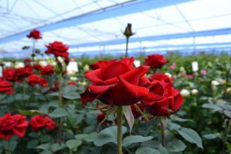 Производство цветов в России в 2021 году может увеличиться на 5–7%
