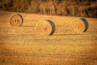 Экспорт сена и кормовых трав из России в 2020 году вырос в 6 раз
