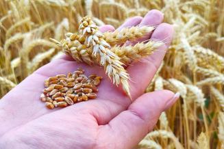 Экспортные пошлины на зерно позволят избежать сокращения производства мяса