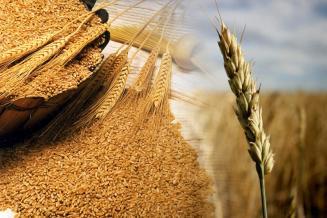 Оренбуржье в пятерке лидеров РФ по обеспеченности семенами