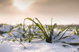 Республика Татарстан готовится к весенним полевым работам