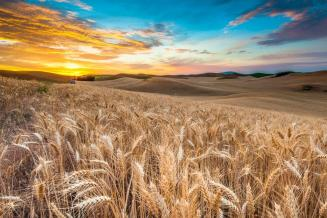 Ввод в оборот 5,3 млн га пашни позволит увеличить урожай зерна на 6,9 млн т