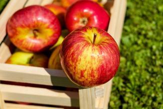 Нейросеть научили определять оптимальный срок хранения фруктов