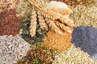 Нижегородская область обеспечена семенами яровых зерновых и зернобобовых культур на 101,2%