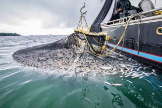 Субсидирование затрат рыбопромышленников натопливо может составить 460млнруб.