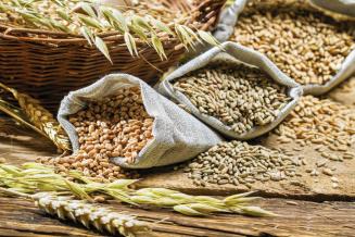 Обеспеченность Курганской области семенами — самая высокая в УФО
