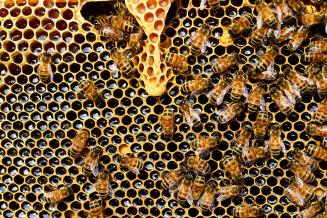 В Свердловской области зарегистрировано более 2 тыс. пчелосемей и 165 пчеловодческих хозяйств