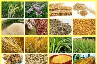 В развитии экспорта в Северной Осетии делают ставку на зерновые — на них приходится свыше 60% поставок