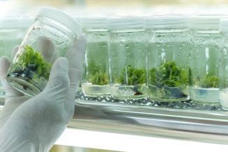 На базе Сколтеха запущен Учебно-научный центр биотехнологии растений