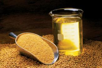 Экспорт масличных изПриморья в2021 году в16,4 раза превысил показатель 2020 года