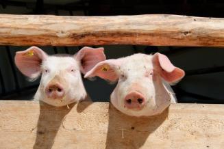 В Кировской области сельхозорганизации увеличили выпуск скота и птицы на убой на 8,7%