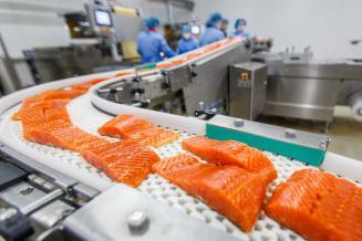 Россия к 2023 году планирует перейти на переработку всей рыбы, пойманной в отечественных водах
