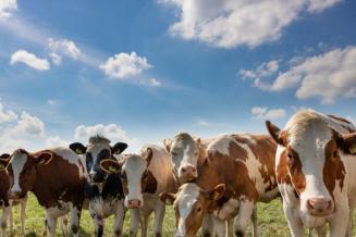 Минсельхоз: к 2025 году производство мяса увеличится до 16,5 млн тонн