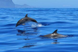 В России хотят запретить добычу китообразных