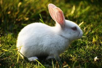 В Оренбургской области открылось кролиководческое предприятие на5,5тыс.голов