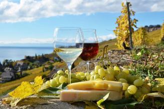 3,4 млрд руб. составит прибавка оборота нашей туриндустрии от развития винного туризма
