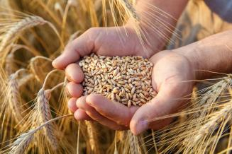 Минсельхоз начал тестирование механизма расчета плавающей пошлины на экспорт зерновых