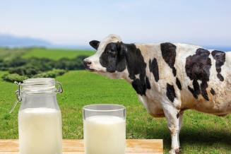 В сельхозорганизациях Удмуртии среднесуточная продуктивность коров выросла на 7,7%