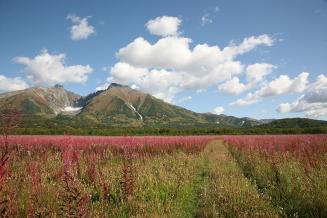 Площадь посевов кормовых культур в сельхозорганизациях Камчатки в 2021 году составит около 4 тыс. га