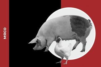 Обзор рынка мяса за 12 месяцев 2020 года