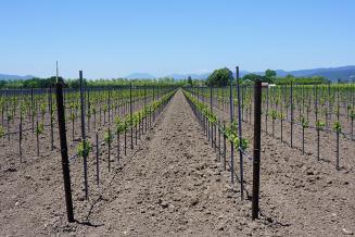 В СевГУ научились делать органические удобрения из переработанного винограда