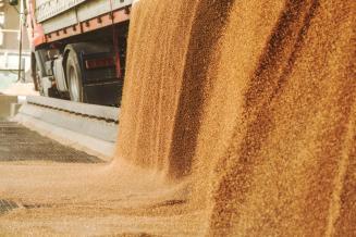 Экспорт пшеницы и меслина изРоссии за январь — февраль вырос более чем в 3 раза