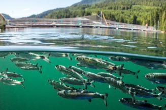 Производство продукции аквакультуры в РФ вIквартале 2021 года выросло на34%