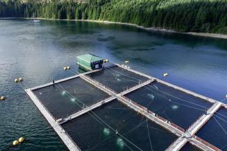 Госдума разрешила использовать лесные участки для рыбного хозяйства