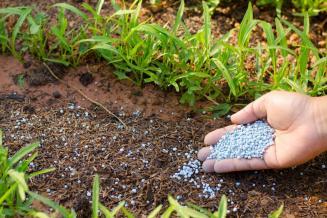 Аграрии Псковской области приобрели в 3 раза больше минеральных удобрений, чем год назад