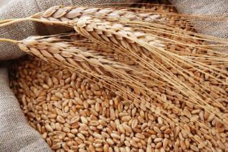 В Крыму ожидается увеличение урожая зерна на 40%