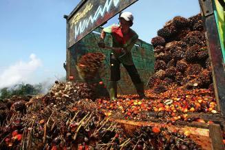 Малайзия заявила, что ВТО согласилась создать комиссию для изучения правил ЕС о пальмовом масле