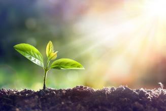 Найден недорогой способ восстановления почвы после загрязнения тяжелыми металлами