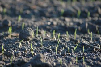 В Забайкалье план сева яровых культур выполнен на 31%