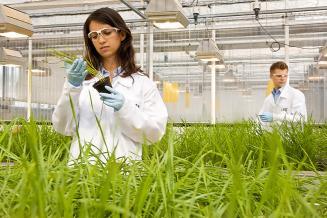 Минсельхоз поможет трудоустроить более 4,5 тыс. студентов аграрных вузов