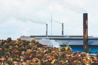 «Пальма» идет в рост. Пандемия задала новые тренды в мировом производстве и потреблении пальмового масла