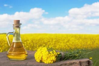 За 5 месяцев изАлтайского края экспортировано рапсовое масло насумму 12,8млндолл.