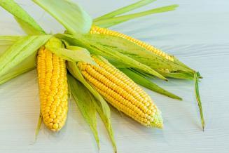 За 5 месяцев экспорт кукурузы изИндии вырос в6,6раза