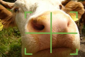 Систему распознавания КРС по форме носа представила на ПМЭФ компания из Удмуртии