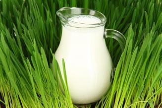 Пензенская область увеличила производство молока на 4,5%