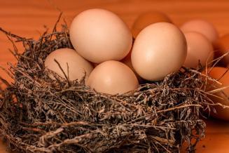 Производство яиц в Башкирии увеличилось на 14%