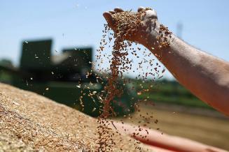 Хлеба и зрелищ: эксперты рассказали о ситуации с ценами на пшеницу, рожь, ячмень и кукурузу